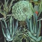 Succulentus Anthracite Wallpaper from Accessories for the Home