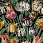 Mind The Gap Tulipa Wallpaper from Accessories for the Home